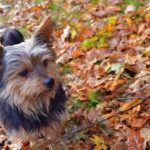 It's Fall in North Carolina!