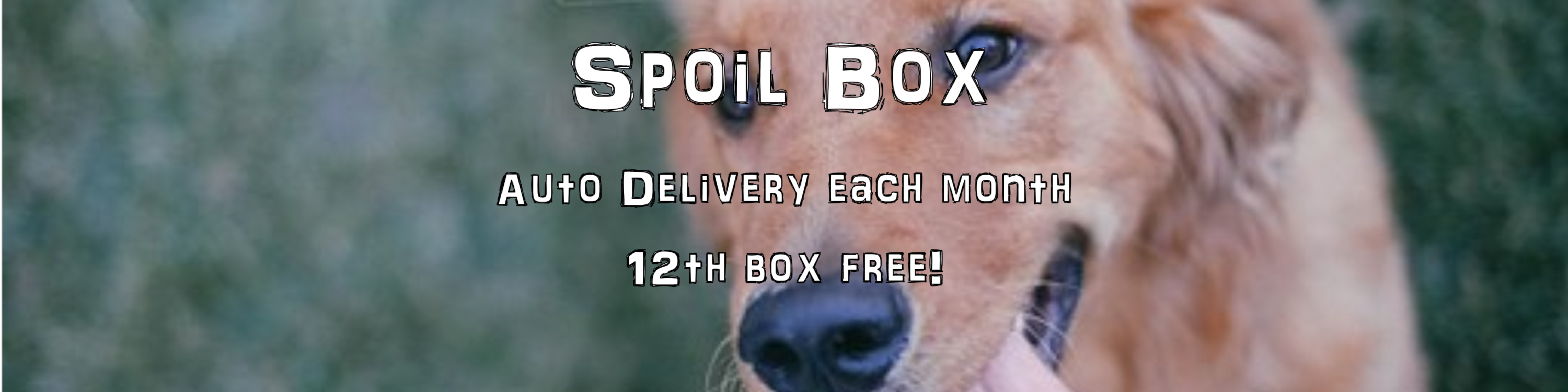 Spoil Box Auto Delivery Blanchards Treats Gibsonville NC 27249